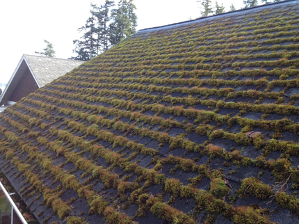 Roof Cleaning And Moss Control Peak Of Perfection Roof